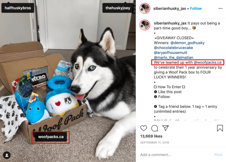 pet influencer campaign